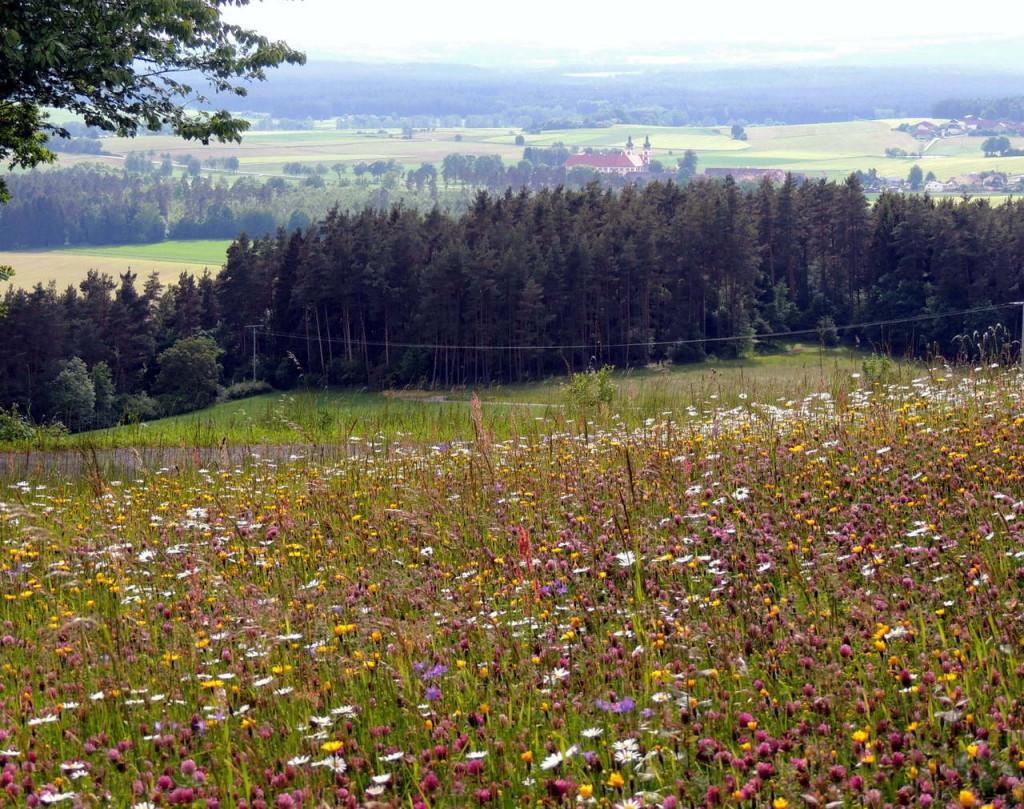 """Blütenreiche Blumenwiesen wie hier auf dem Barbaraberg mit dem Kloster Speinshart im Hintergrund sollen auf landkreiseigenen Grün-, Frei- und Ausgleichsflächen entstehen. Einen Antrag auf die """"bienenfreundliche"""" Maßnahme will die CSU in den Kreistag einbringen."""